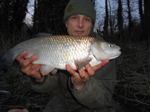 On a roll with the boilie-caught chub