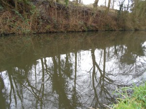 I'm enjoying my canal chub fishing
