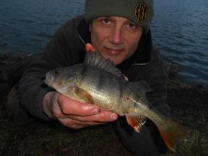 A dusk lake perch