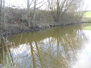 Fishing to a bank of common alder