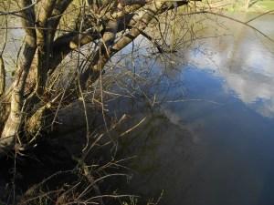 The overhanging tree swim