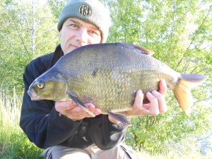 A bream in bright sunshine
