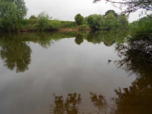 The lower Severn in June