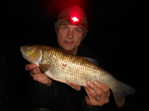 A chub on Barbel Stix