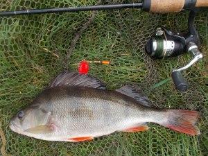 Perch plus tackle