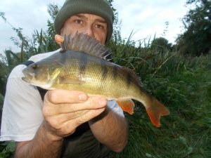 The perch - my favourite fish