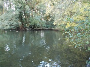 A perch swim with lots of overhanging trees