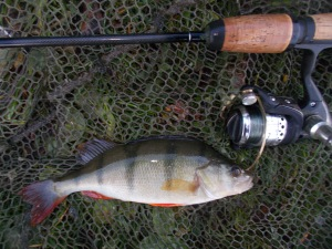 Another perch on the bank
