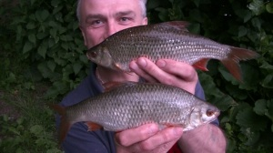A brace of roach to end the blog with