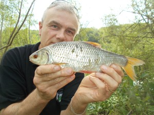 A Severn roach on the bank