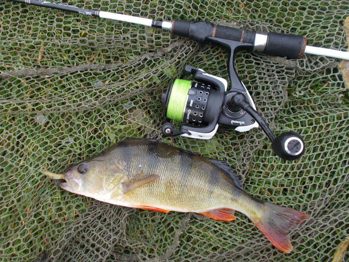 A fish, rod and reel photo looking good