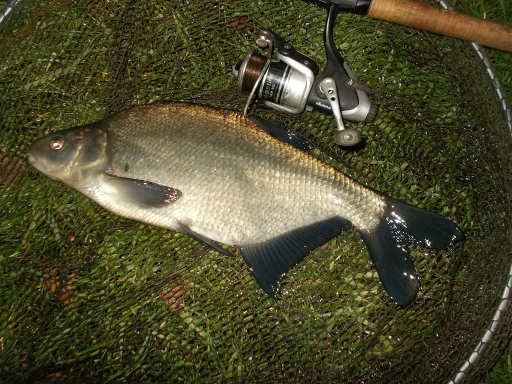 A decent size hook and a big bait didn't deter the bream