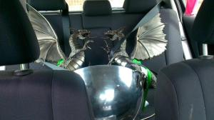The royalty of Welsh silverware on the back seat