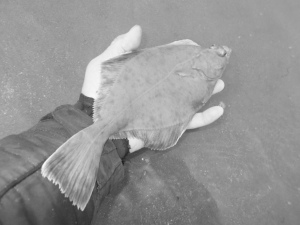 Returning a flounder
