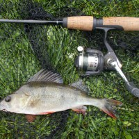 THE LURE OF SPINNING WHEN TIME IS SHORT (Perch) - Blog entry 633