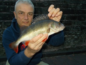 A nice Staffs/Worcs Canal perch