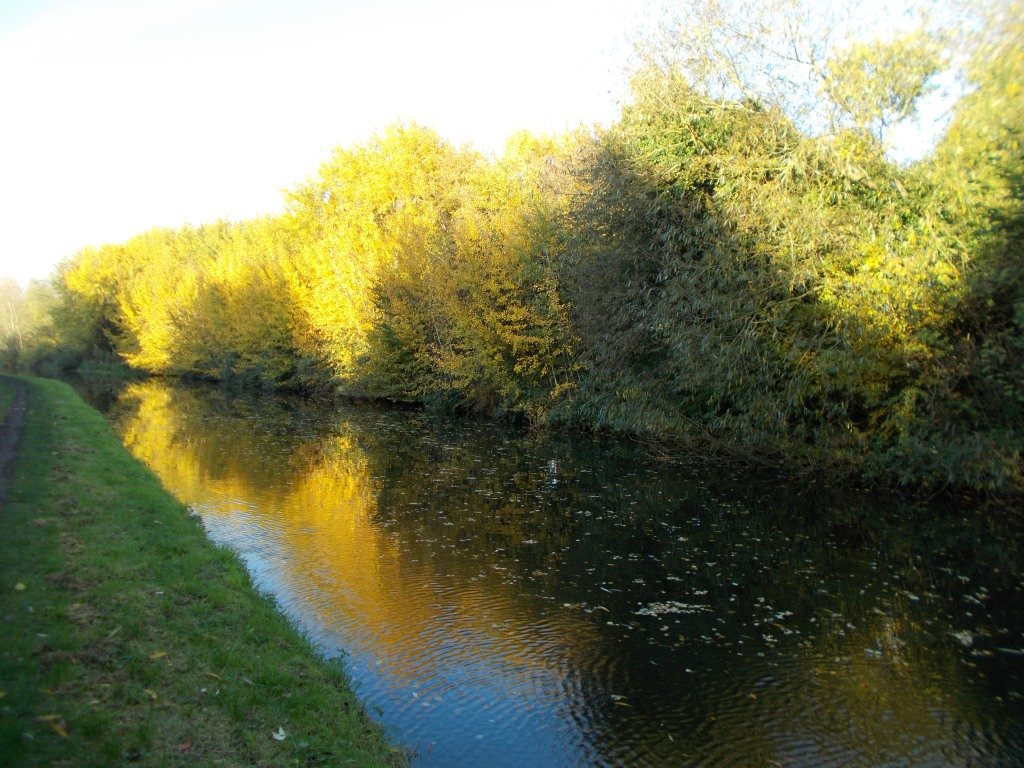 The canal in late autumn