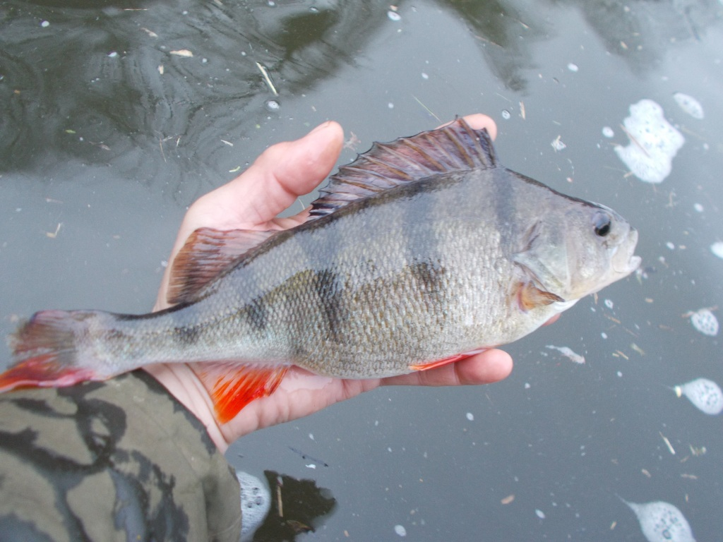 Another perch going back home