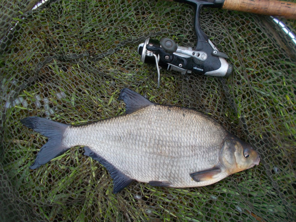 Not monsters, but decent bream in the canal