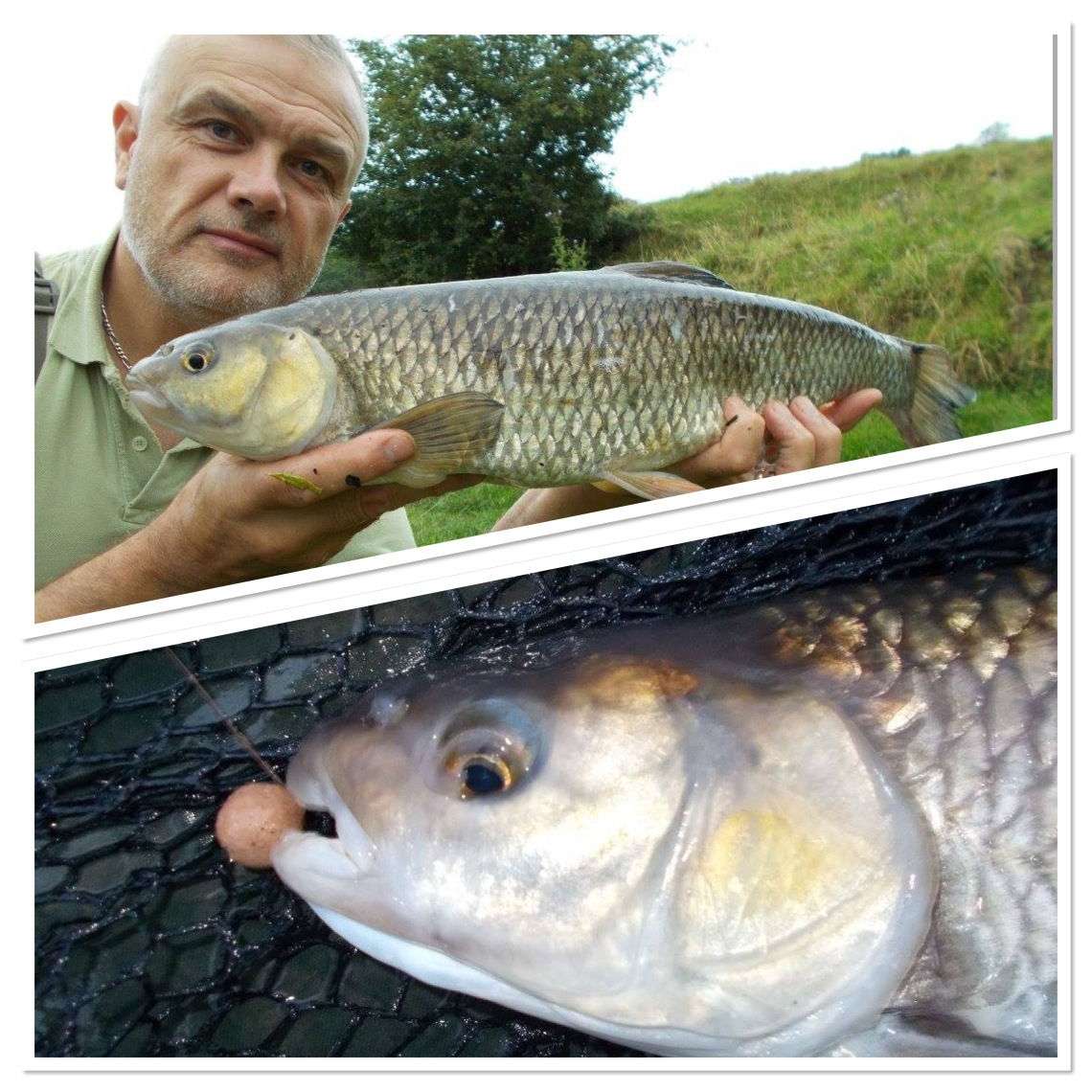 All the fish fell to frankfurter sausage boilies