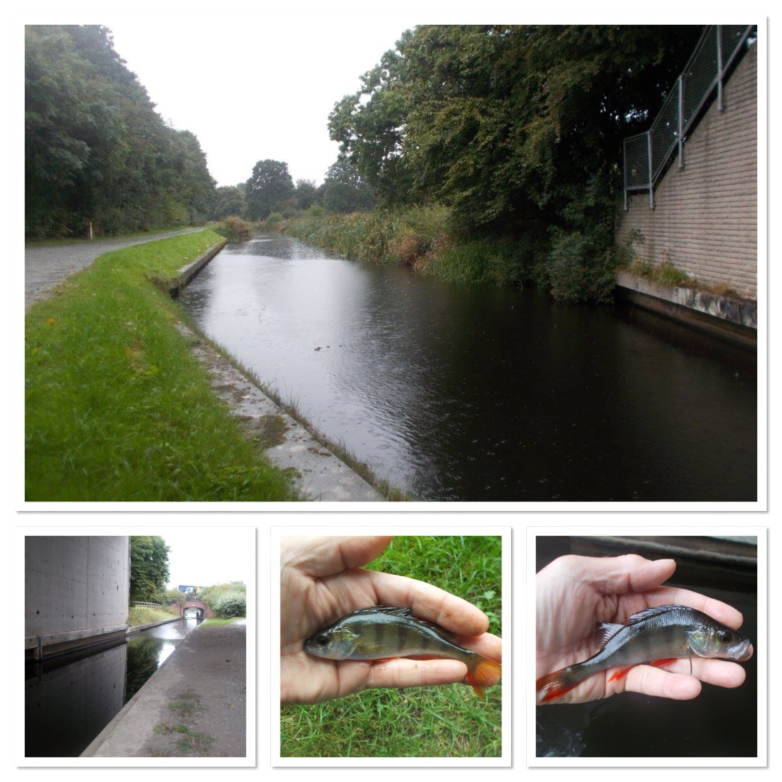 Montgomery Canal and some of its residents