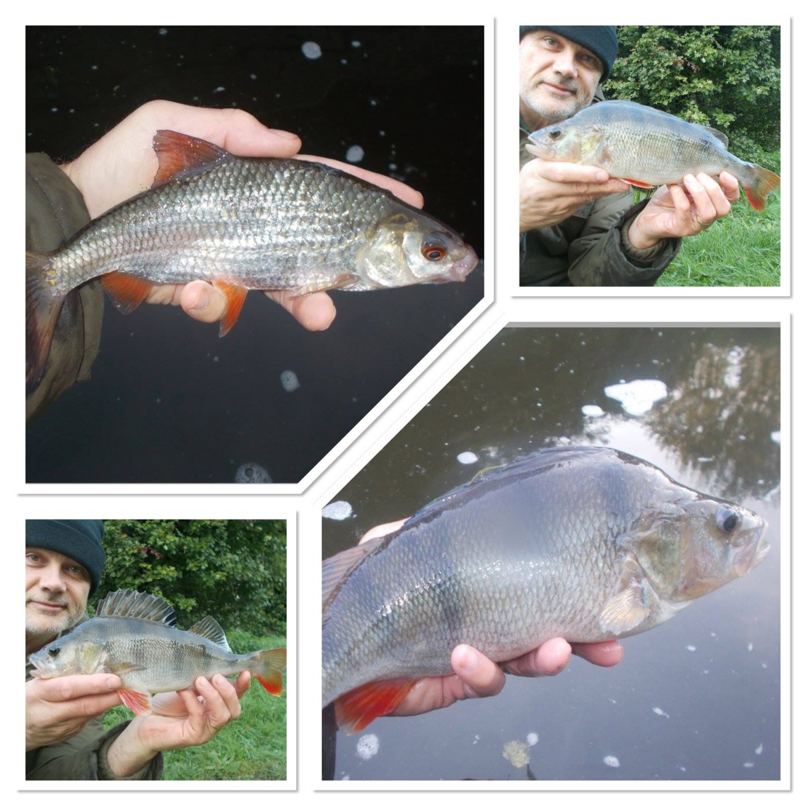 I had some nice fish from the canal this week