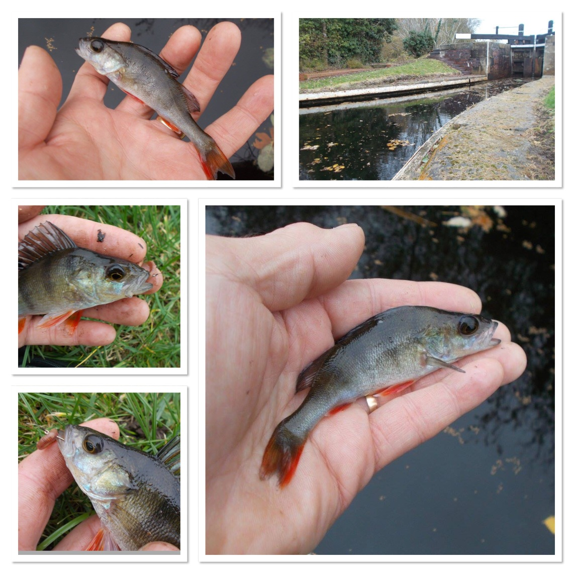 Perch from the canal