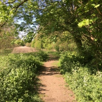 A Nature Walk Around Turls Hill And A Very Pleasant Surprise