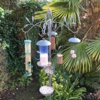 Garden Nature Blog 2021