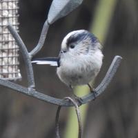 First Garden Nature Blog Of March